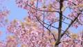ดอกไม้บาน,ลม,ดอกไม้ 46866969