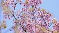 ดอกไม้บาน,ลม,ดอกไม้ 46866974