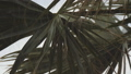 Rain drops fall down and wash fan palm leaf during summer storm. Slow motion, close up 46891086