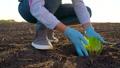 ガーデニング 園芸 植物の動画 46892253