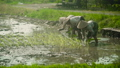 Farmers are planting rice 47079359