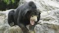 熊 動物 動物園 47201305