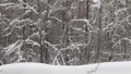 heavy snowfall is on the background of the winter forest 47224237