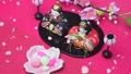 Hinamatsuri:Hina娃娃和花瓣散落在舞蹈中 47256747