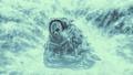 Frozen climber sitting in snow 47334648