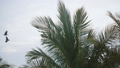 Idylluc cinematic background shot of big exotic birds flying among lush palm trees on sunny exotic 47485630