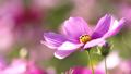 Autumn image ~ Autumn cherry ~ 47598082