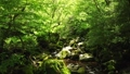 드론 촬영 신록의 숲 계류 전진 47609746