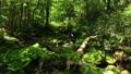 드론 촬영 신록의 숲 계류 전진 47609747