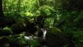 드론 촬영 신록의 숲 계류 후퇴 47609748