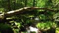 드론 촬영 신록의 숲 계류 하강 47609749