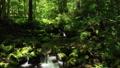 드론 촬영 신록의 숲 계류 후퇴 미속 47609750