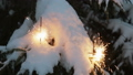 burning sparklers on the Christmas tree in the winter forest 47634549
