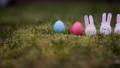 decoration for Easter. Easter bunnyes 47650507