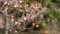 梅の花  2019 フィクス撮影 47887787