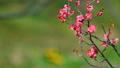 梅の花  2019 フィクス撮影 47887797