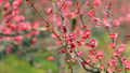 梅の花  2019 フィクス撮影 47887803