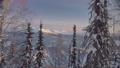 Winter forest in the Siberian mountains 48039379