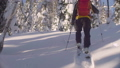 Skitour in Siberia. A man skiing in a snowy forest. 48039428