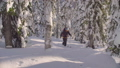 Skitour in Siberia. A man skiing in a snowy forest. 48039430