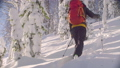 Skitour in Siberia. A man skiing in a snowy forest. 48039434