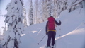 Skitour in Siberia. A man climbing up the hill in a snowy forest. 48039438