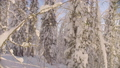 Winter forest in the Siberian mountains 48039440