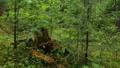 Walking through forest in summer 48118068