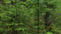 Walking through forest in summer 48118069