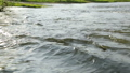 Rapid current of river in summer day 48118076
