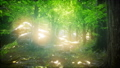 Forest of Beech Trees illuminated by Sunbeams 48118493