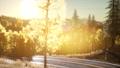 Forest under Sunrise Sunbeams 48118499