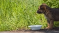 Stray lonely puppy near a bowl of food. 48225857