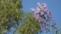 Flowering branch of lilac against the blue sky. 48225858