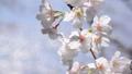 桜-6030173 48226955
