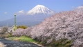 潤井川と富士山-6030189 48226956