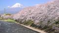 潤井川と富士山-6030191 48226957