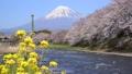 潤井川と富士山-6030265 48226960