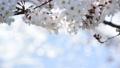 桜-6030305 48226962