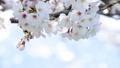 桜-6030309 48226963