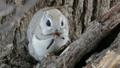 在超級遠攝拍攝,同時在樹上吃喵喵叫 48345982
