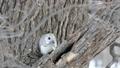 從樹上堅果的對角直立的Momonga拍攝 48345984