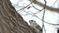 在用高速相機拍攝的鳥害怕的樹上的摩門教徒 48345995