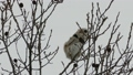 Momonga從樹枝上取堅果吃 48346015