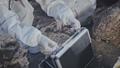 鍾乳洞 リサーチ 科学者の動画 48368914