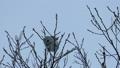 Momonga吃在高樹枝的胸口堅果 48385114