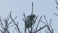 Momonga吃在高樹枝的胸口堅果 48385116