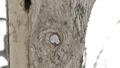 Momonga從一個圓形的小巢洞中出來,刮鬍子 48385120
