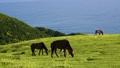 도이 미사키의 미사키 말과 잔잔한 바다 48411979