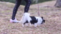 犬 チワワ 子供の動画 48413657